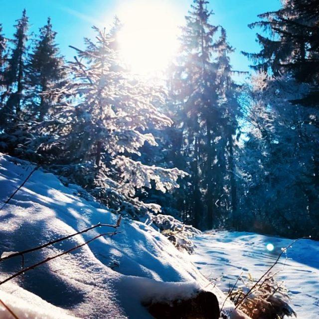 deep in the woods 🌲🔔 #alps #mountains #swissalps #swissmountains #switzerland #bern #thun #mountainbike #mtbswitzerland #mtbenduro #enduromtb #levolove #specialized #swisscycling #ridewithguide #marczauggbike #wearebikebox #lifebehindbars #winterwonderland #jumpandride #slowmotion #swisstrailbell #feb2021 #nature #sun #snowride